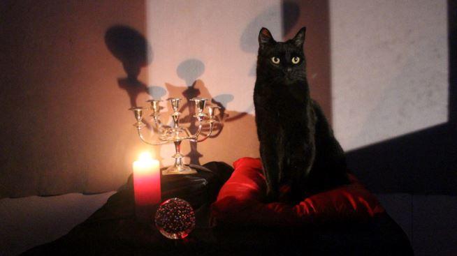 Première image de Salem chat Sabrina serie